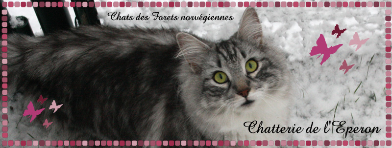 Chat-land site de chat et de rencontre gratuit