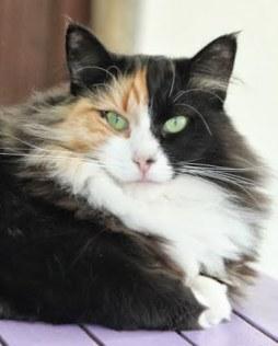 chat Montélimar
